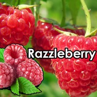 Razzleberry 10ml 50/50 By Vjuice